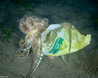 Coconut Octopus with crisp packet!